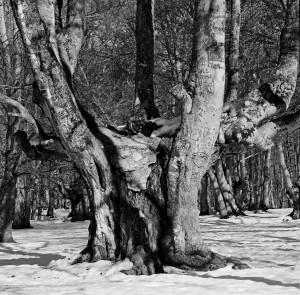 bosco di sant'antonio 2