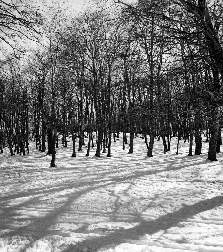 bosco di sant'antonio 3